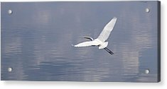 On Swift Wings Acrylic Print