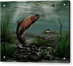 On The Attack - Rainbow Trout After A Fly Acrylic Print by Ron Grafe