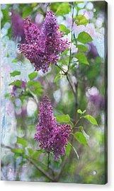On The Bush Acrylic Print by Rebecca Cozart