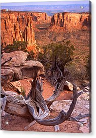 On The Edge Acrylic Print by Ray Mathis