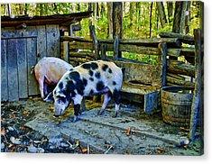 On The Farm Acrylic Print by Kenny Francis