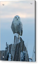 On The Fence Acrylic Print by Stephen Flint