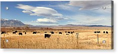 On The Open Lands Acrylic Print by Marilyn Diaz
