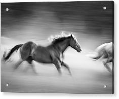 On The Run Acrylic Print by Dianne Arrigoni