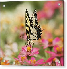On The Top - Swallowtail Butterfly Acrylic Print by Kim Hojnacki