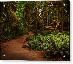 On The Trail To .... Acrylic Print by Randy Hall