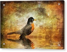 On The Watch For Worms Acrylic Print by Lois Bryan