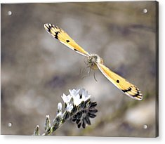 Acrylic Print featuring the photograph On The Way by Meir Ezrachi
