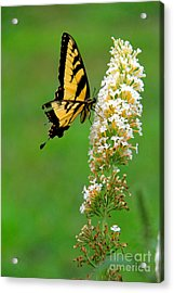 On The Wings Of A Butterfly Acrylic Print
