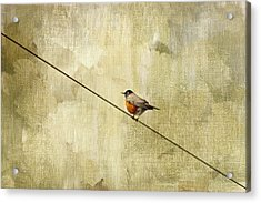 On The Wire Acrylic Print by Rebecca Cozart