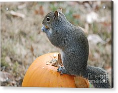 Acrylic Print featuring the photograph On Top Of The Pumpkin by Mark McReynolds