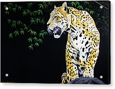 Onca And Bamboo Acrylic Print by Chikako Hashimoto Lichnowsky