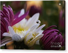 One And Only Acrylic Print by Stela Taneva