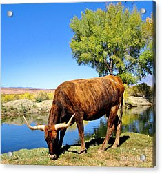 Acrylic Print featuring the photograph One Big Boy by Marilyn Diaz