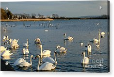 Acrylic Print featuring the photograph One Big Family... by Katy Mei