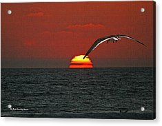 One Black Skimmers At Sunset Acrylic Print by Tom Janca