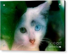One Blue One Green Cat In New Olreans Acrylic Print by Michael Hoard