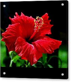 One Day Flower Acrylic Print