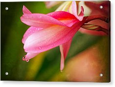 Acrylic Print featuring the photograph One Drop by Sharon Jones