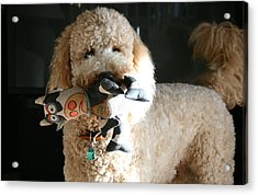 One Happy Labradoodle Acrylic Print by Horst Duesterwald