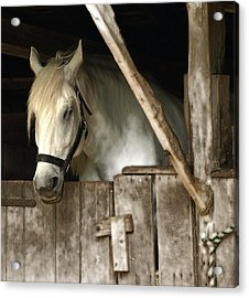 Acrylic Print featuring the photograph One Horse  by Raymond Earley