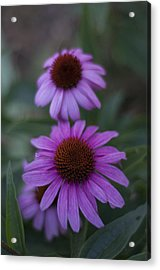 One Is Shy Acrylic Print