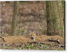One Last Look Acrylic Print by Everet Regal