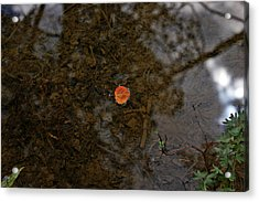 Acrylic Print featuring the photograph One Leaf by Jeremy Rhoades