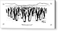 One Penguin In A Large Group Of Penguins Speaks Acrylic Print by Kaamran Hafeez