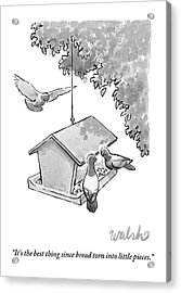 One Pigeon Speaks To Another At A House-shaped Acrylic Print by Liam Walsh