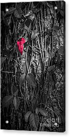 One Red Leaf Acrylic Print