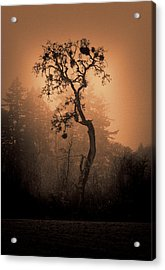One Stands Alone Acrylic Print