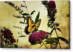 One Summer Day  2 Acrylic Print by Judy Wolinsky
