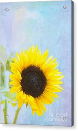 One Sunflower Acrylic Print by Kay Pickens