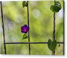 One Acrylic Print by Tammy Espino