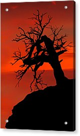 One Tree Hill Silhouette Acrylic Print