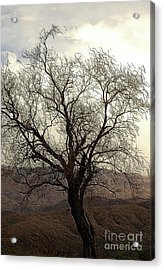 One Tree Acrylic Print by Kathleen Struckle