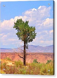 Acrylic Print featuring the photograph One Tree by Marilyn Diaz