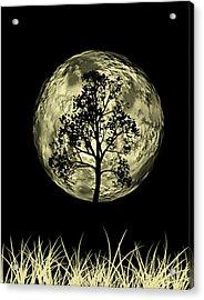 One Tree  Acrylic Print by Mark Ashkenazi