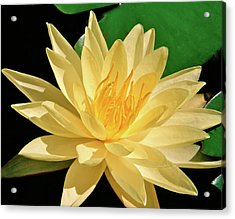 One Water Lily  Acrylic Print by Ed  Riche