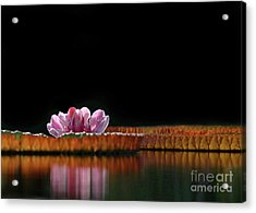 One Water Lily Acrylic Print by Sabrina L Ryan