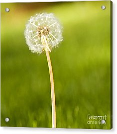 Acrylic Print featuring the digital art One Wish  by Artist and Photographer Laura Wrede
