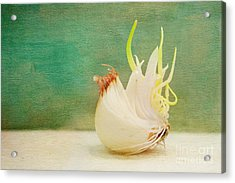 Onion Bird Acrylic Print by Kay Pickens