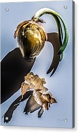 Onion Skin And Shadow Acrylic Print
