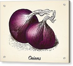 Onions Vintage Illustration, Red Onions Acrylic Print