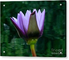 Only A Reflection Acrylic Print