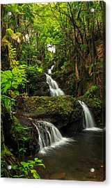 Onomea Falls Acrylic Print by James Eddy