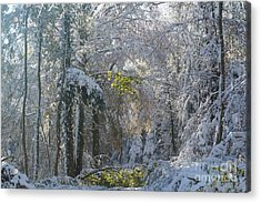 Onset Of Winter 1 Acrylic Print by Rudi Prott