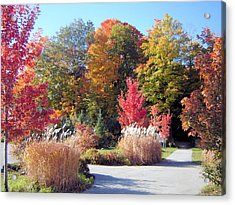 Ontario In The Fall Acrylic Print by Gaetano Salerno