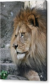 Acrylic Print featuring the photograph Onyo #11 by Judy Whitton